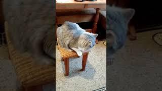 Прикол с котом Петровичем 1#