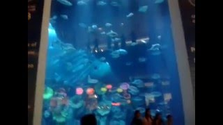 emirates big fish acouriyumm dubai