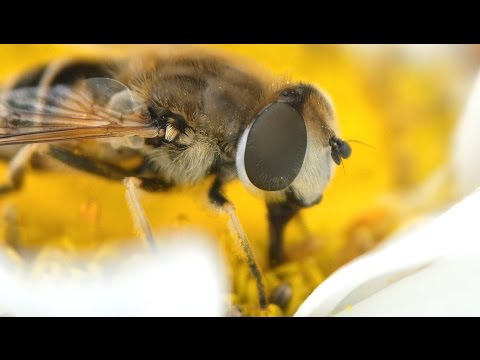 How to Make a Macro Lens