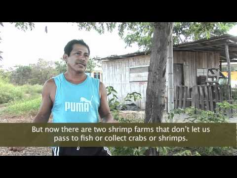 The Truth Behind  Organic  Shrimp Farming In Ecuador