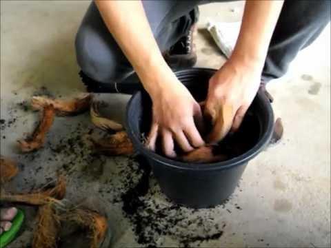 การปลูกพืชกลับหัว RMUTL