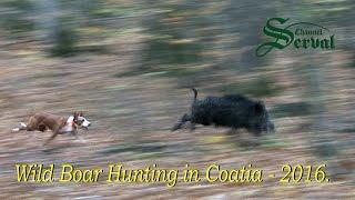 Wild Boar Hunting in Croatia 2016 - Drückjagd in Kroatien 2016