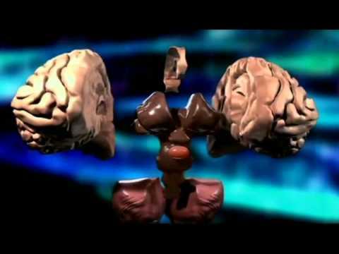 Secretos del Universo con Morgan Freeman 2x09 ¿Podemos vivir eternamente?