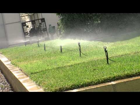 watering your kenda® kikuyu lawn and other turf watering tips, Natural flower