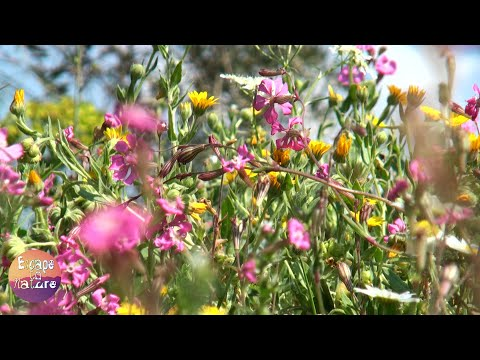 3 hours relaxing nature sounds for studying # Bird singing and spring flowers # Video FHD 1080p.