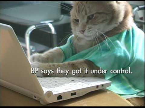Keyboard Cat Blogs about BP!