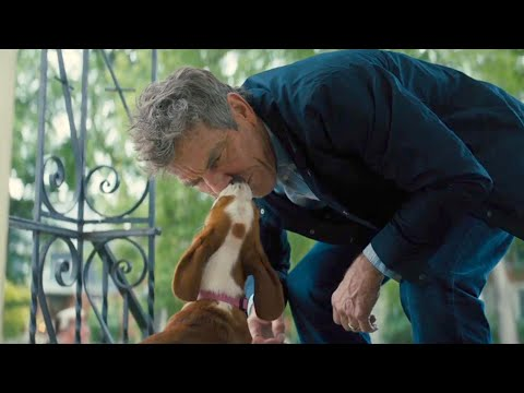 A Dog's Journey | Bailey Finds Ethan | Film Clip | Own It Now On Digital, 8/20 On Blu-ray & DVD