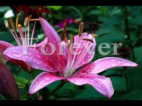 Rico J Puno - Together Forever