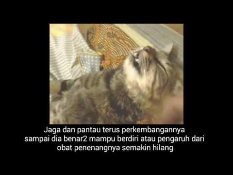 Cat urethral obstruction