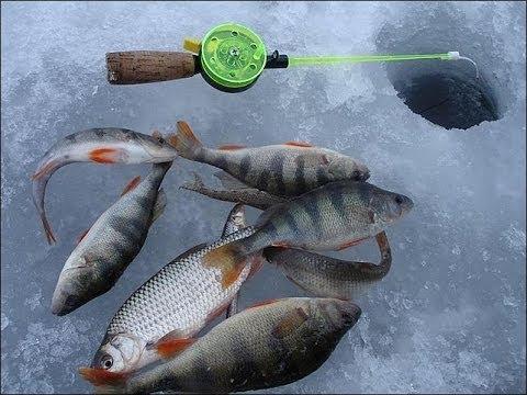 Смешная рыбалка