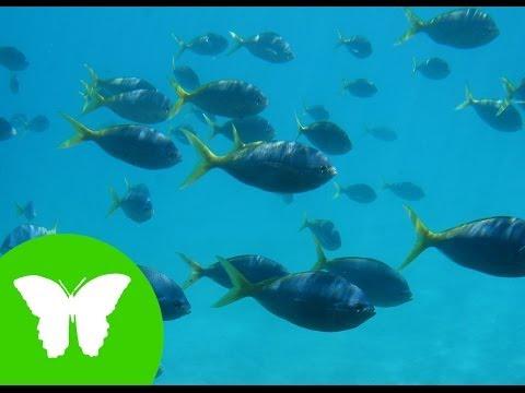 La Eduteca - Los anfibios y los peces