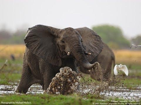 Animal South African Wildlife safari topten@world