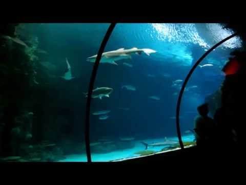 Shark Reef Aquarium - Mandalay Bay- Las Vegas