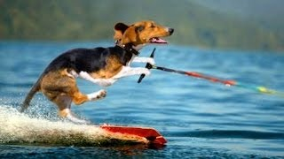 Funny animals playing sports - Cute animal compilation