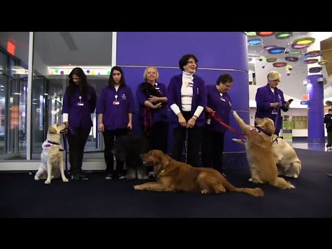Pet Therapy Program at Children's Hospital of Pittsburgh
