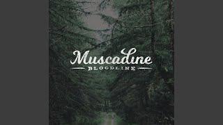 Muscadine Bloodline Ginny