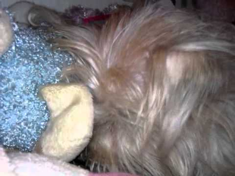 GOODNIGHT AND DOG BLESS! XXX LOVE, AMBER AND SHANDY XXX thumbnail