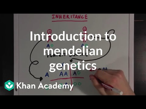 An Introduction to Mendelian Genetics | Biomolecules | MCAT | Khan Academy