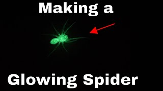 Making the World's First Glow-in-the-Dark Spider—And Then Releasing it in my House!!