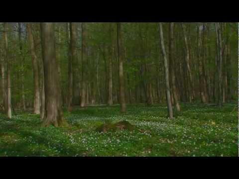 Zeitraffer: Buchenwald - vom Frühling zum Sommer