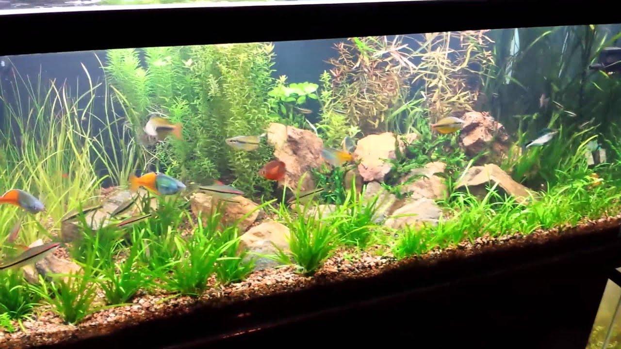 Aquascaping A Planted Aquarium Can Be Difficult 75 Gallon Planted Aquarium Didn T Over Think It