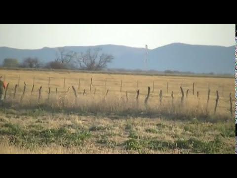 caza de liebres con galgos