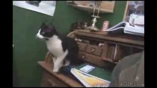 Animals Being Dumb - Fail Compilation, 2013
