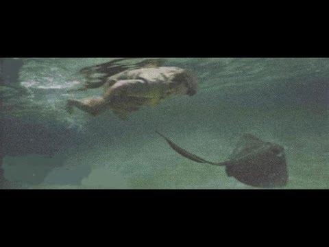 Así murió Steve Irwin's, el cazador de cocodrilos en 2006