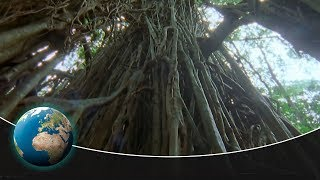 The Strangler Fig – The Creeping Death