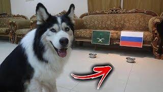أذكى كلب يتوقع نتيجة مبارة السعودية وروسيا في كاس العالم !!