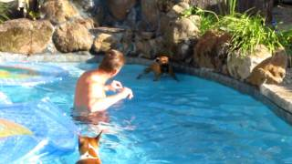 Boxer Swimming Lessons
