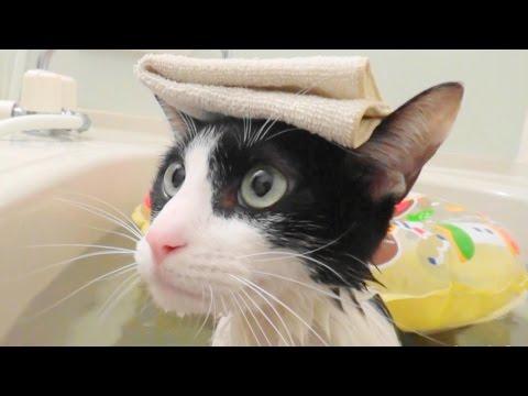 飼い主とのんびりお風呂に入る猫