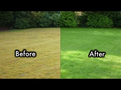 8 Secrets To  Keep Your Lawn Always Green And Healthy