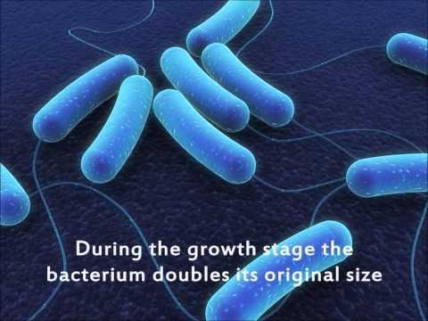 How do bacteria reproduce