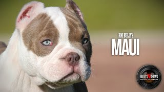 RM Bullys MAUI - LIL MAYO xXx NATASHA (2Months)