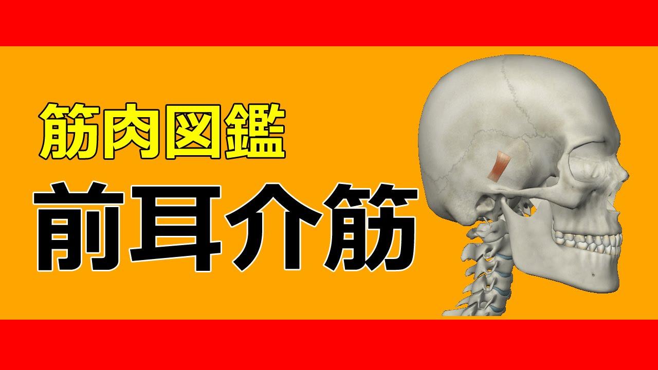 筋肉動画図鑑】前耳<b>介筋</b> - 筋肉研究所 - YouTube