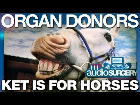 Organ Donors - Ket Is For Horses (Original Mix) HD