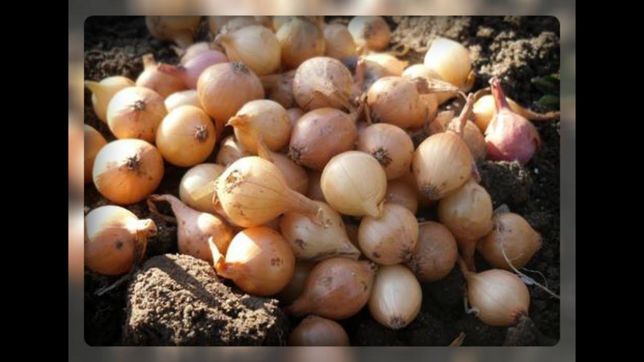 Как и когда сажать картофель весной 2017: благоприятные дни 6
