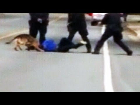 Dramatic police takedown involving K9 caught on camera