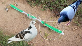 The First Unique Simple Bird Trap Make from 2 Toothbrush - Best bird trap Technology
