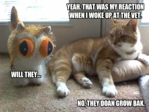 Very Funny Cats 66