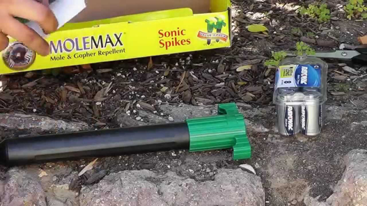 How To Keep Chipmunks Squirrels Mice Moles Gopher