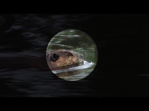 November's Full Beaver Moon