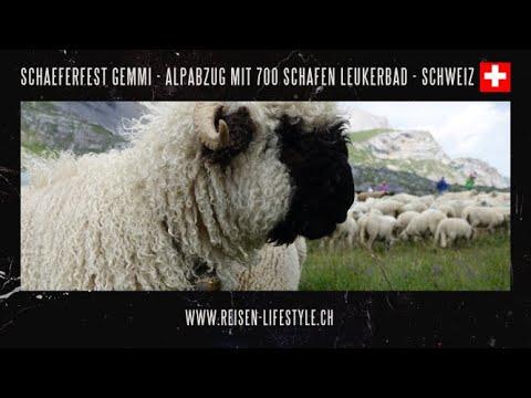 Wallis - Leukerbad Schäferfest, Majinalp und Albinen, reisen-lifestyle.ch