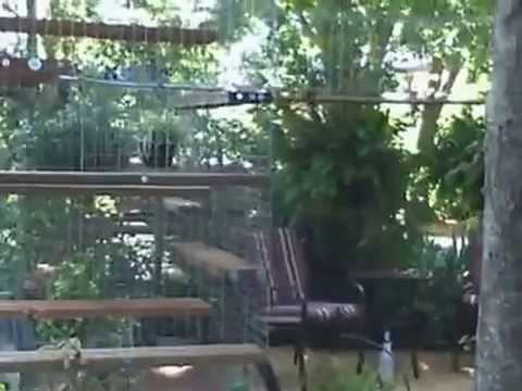 Enclos pour chat ext rieur habitat haven chatterie cage youtube - Comment eloigner les mouches a l exterieur ...