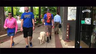 6 Mo Old Great Pyrenees, Rosie | Greenville SC Best Dog Trainers