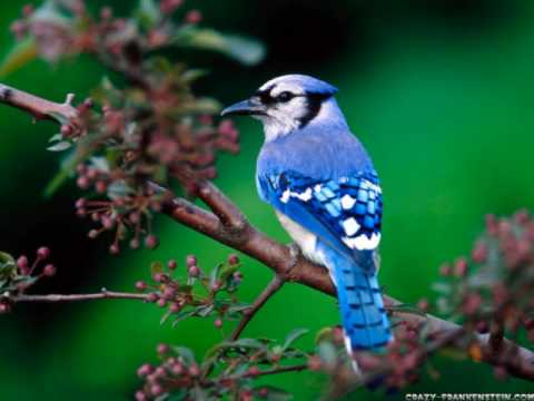 The sounds of spring - bird songs