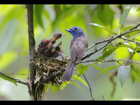 How to Feed a Baby Bird That Fell Out of the Nest
