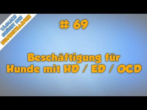 TGH 69 :  Beschäftigung für Hunde mit HD / ED / OCD