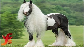 Top 10 Most Beautiful & Rarest Horse Breeds In The World